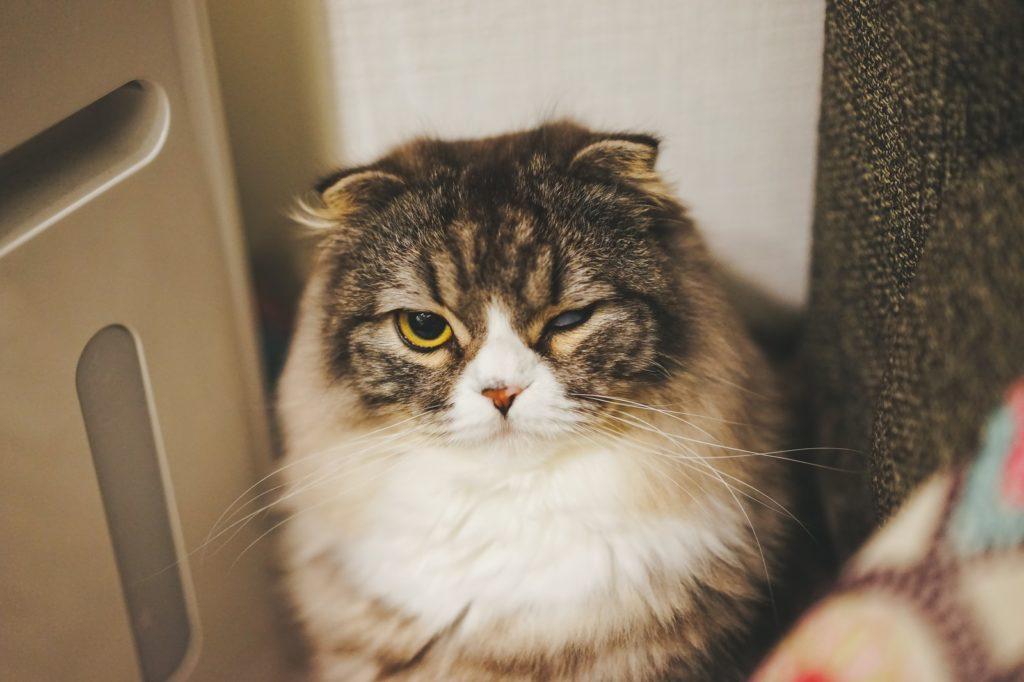 怒る猫の画像
