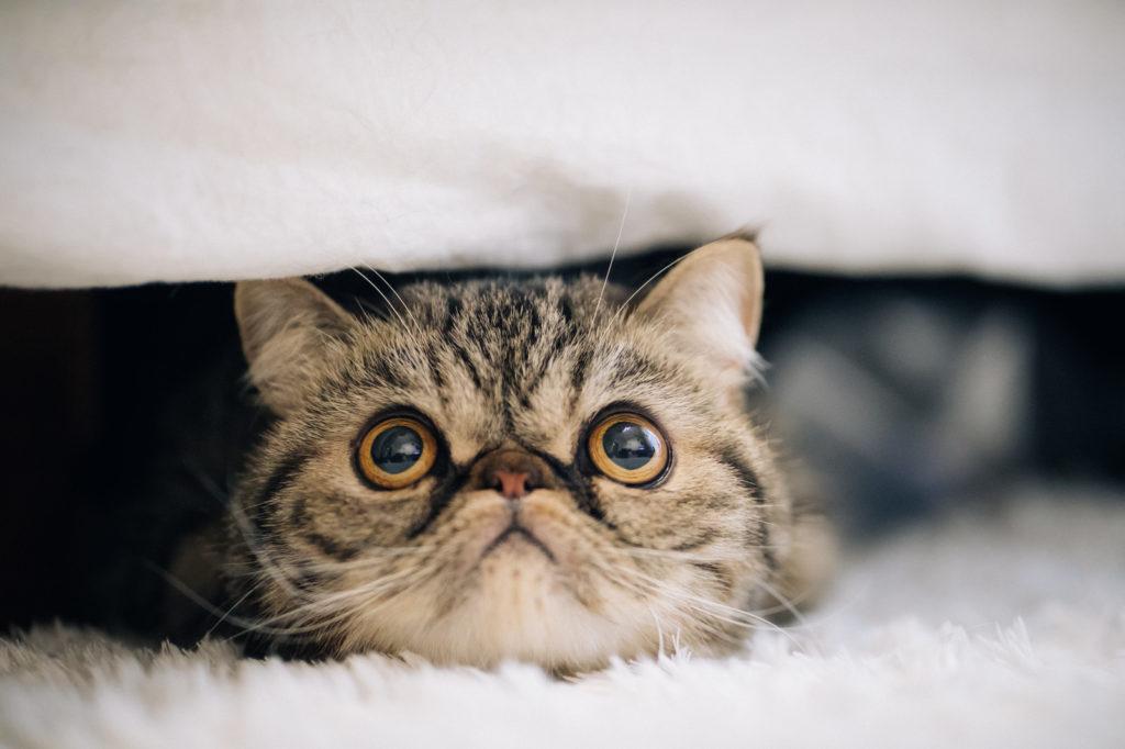 アピール不足の猫