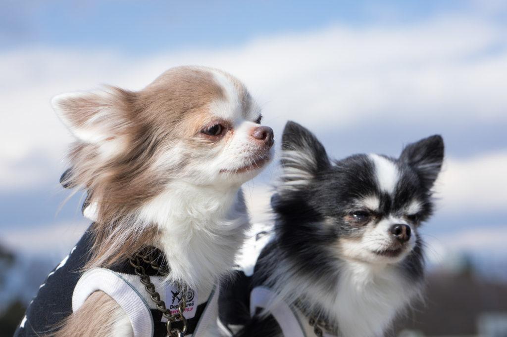 育った犬たちの画像