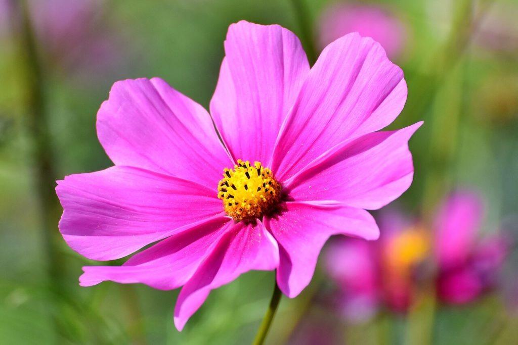咲き誇る花の画像